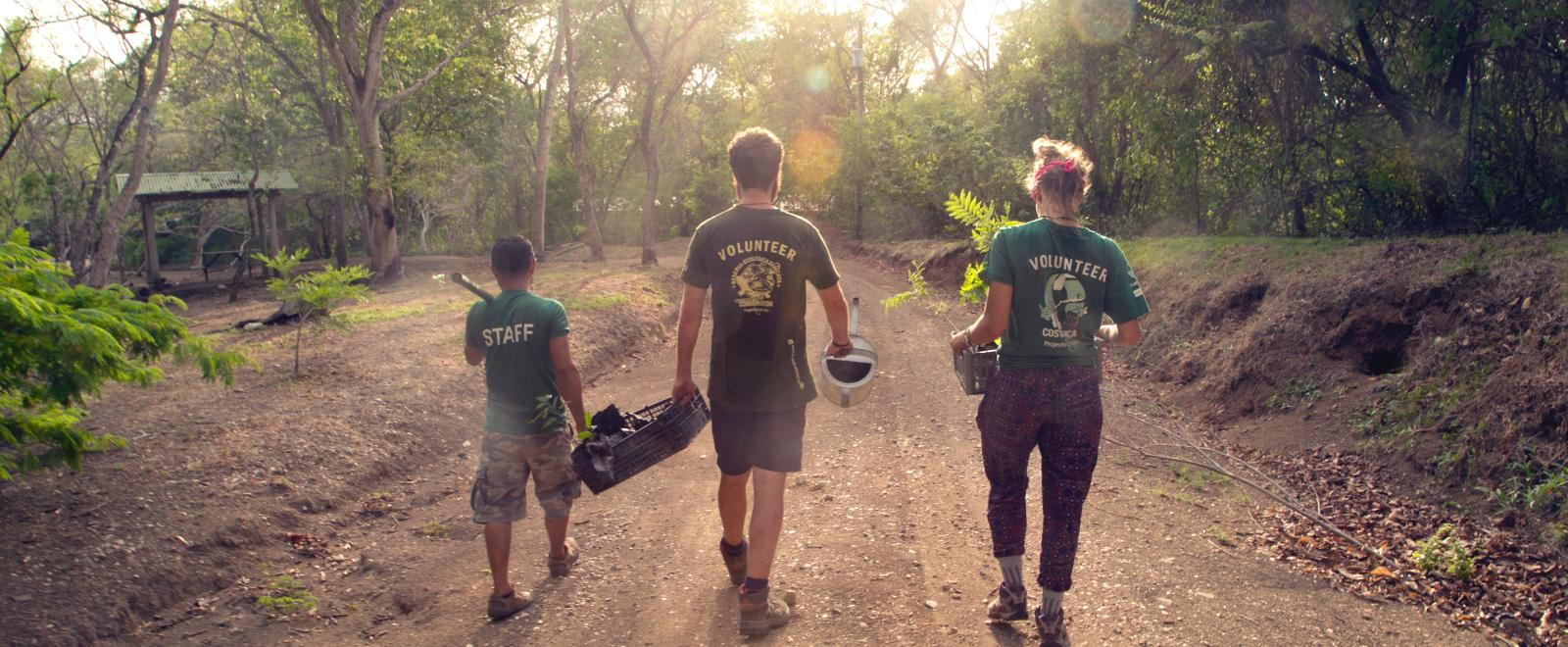 Projects Abroad staff and volunteers carry trees after planting saplings in Costa Rica
